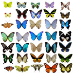 35 different types of butterflies